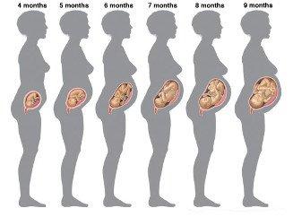 Плод в 19 недель беременности