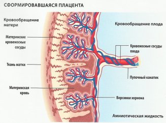 Энтеровирусы у детей фото